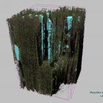 Фитолиты в коре дерева